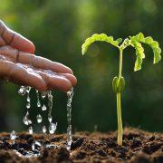 Hand, Wasser und Pflanze